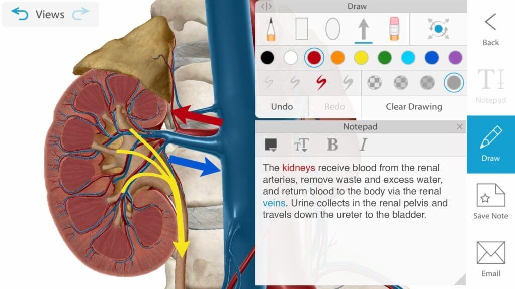 Как пользоваться Human Anatomy Atlas 2021?