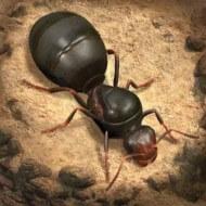 The Ants: Underground Kingdom 1.5.0